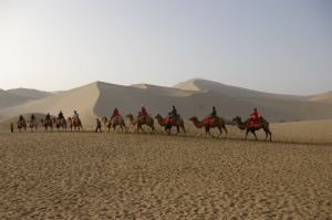 Camels in the Singing Sands